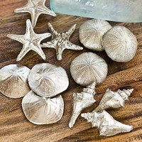 Set of 48 Assorted Silver Mini Seashells