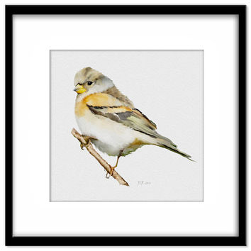 Bird Painting, Brambling Watercolour, Fine Art Instant Download, Cottage Garden Wall Art, Card Making