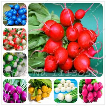 100 Pcs Sweet Rainbow Radish Seeds Vegetables Seed,Non-Gmo Vegetable Seeds,Bonsai Seeds,Garden Nutritious Fruits Planting
