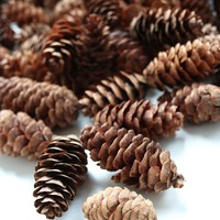 "Mini Preserved Spruce Cones - Approximately 250-300 Cones - 1.5-2.5"" Long"