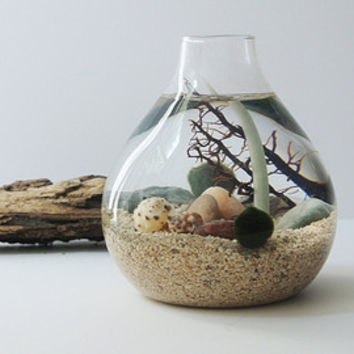 Urchin's Oasis  Aqua Terrarium  - Marimo Ball, Japanese Moss Ball, Living Home Decor, Gift, Aquarium, Sea Fan, Sand, Sea Shells,