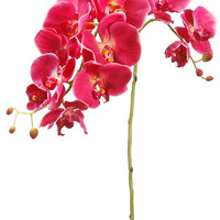 Phalaenopsis Orchid in Fuchsia Pink | Silk Wedding Flowers | Same Day Shipping