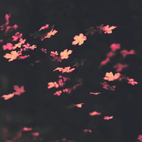 leaves photography, pink leaves, nature photography, whimsical fine art print, surreal moody fine art print, bedroom wall decor,  home decor