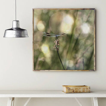 Dragonfly Photo, Montana Nature Photography, Nursery Wall Art, Dreamy Art, Insect Art, Outdoors, Wilderness, Office Art, Nature Lover Gift