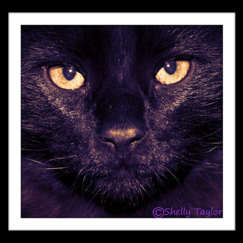 Black Cat Photography - Halloween, Animal Wall Art - Instant Digital Download, Gift for Cat Lover, Printable Home Decor, Gothic