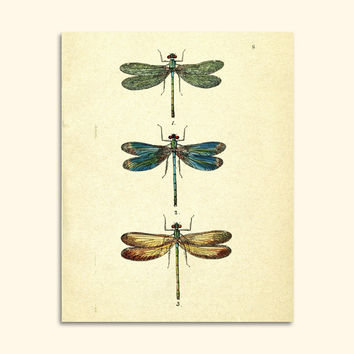Vintage Dragonfly Art Print - Digital Graphics, Animal Printable Wall Art, Dragonflies Home Decor, Colorful Antique Image - INSTANT DOWNLOAD
