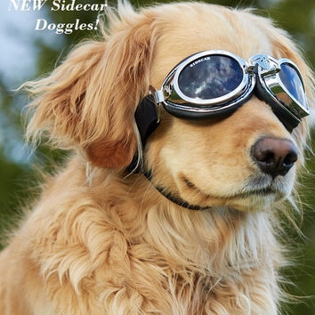 Doggles Sidecar Dog Goggles Sunglasses
