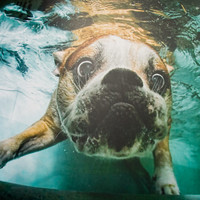 Underwater Dogs at Firebox.com