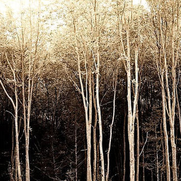 Photo spooky forest black white and brown vintage toned image of woodlands 8x12 art print