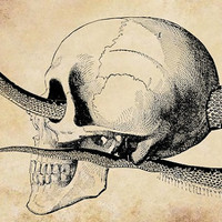 human skull snake png Digital graphics download anatomy animals for cards t shirts pin buttons etc