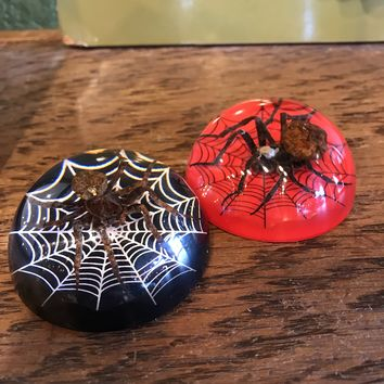 Spider and Web Paperweight