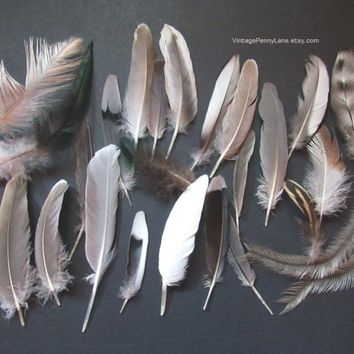 24 Foraged Cruelty Free Feathers, Alter, Crafting, DIY, Supplies, Wild Bird Feathers