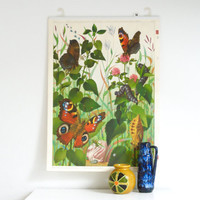 SCHOOL WALL Chart 1955, Mid Century Swiss School Poster, 'Metamorphosis of a Butterfly', Made in Switzerland, Vintage Pull Down Wall Chart