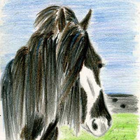 Gypsy Vanner Stallion ACEO Art Print - The Beauty of Horses No.6