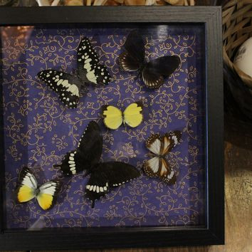 Butterfly Collection in 9x9 Frame