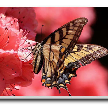 Song Of A Butterfly Stretched Canvas Print