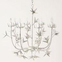 High-Minded Chandelier-Anthropologie.com