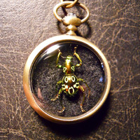 Bronze Spotted Beetle Specimen Pocket Watch Ossuary Green Metallic Bug