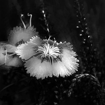 Magical still life, black white wild flowers, bw nature photography, Fall Winter home decor, rustic chic, sophisticated, unusual garden art