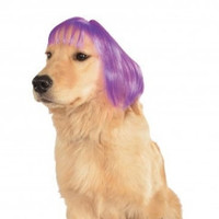 Purple Short Bob Dog Wig - Medium/Large