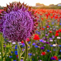 wildflower field photo by lifeasagift on Etsy