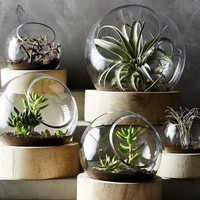 Planetarium Terrarium by Anthropologie