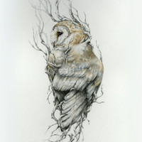 Barn owl -11 x 14 reproduction of original drawing