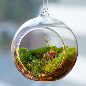 Terrarium Ball Globe Shape Clear Hanging Glass Vase Flower Plants Container Ornament Micro Landscape DIY Wedding Home Decor