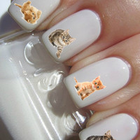 Cute Kitten Nail Decal