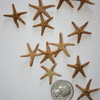 "12 Tiny Brown Starfish 1"" Beach Decor Wedding Crafts"
