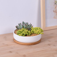 White Ceramic and Bamboo Succulent Planter