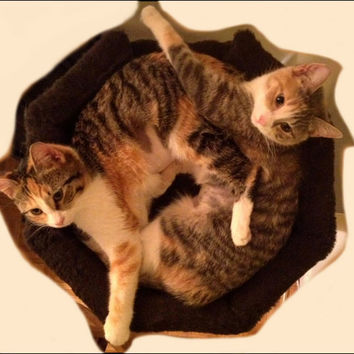 Cat Tree MODERN CAT Furniture SALE 4' Best Designer Luxury Cat Beds Custom Cat Trees Condos Unique Cat Scratching Posts  Free Shipping.