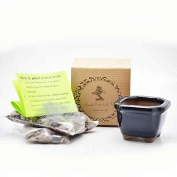 "Olea Europea ""Olive"" Bonsai Seed Kit- Gift - Complete Kit to Grow"