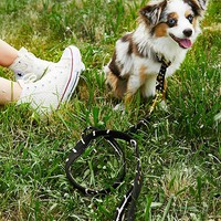 Free People King of the Jungle Leash