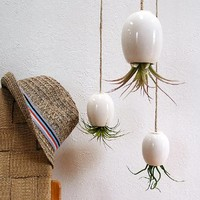 Supermarket: LARGE Hanging Air Plant Pod ™ - Gorgeous Glossy White from mudpuppy