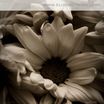 Black and White Sepia Tone Photography 8x10 Print Nature Flowers Daisies