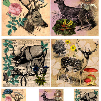 "deer antelope 4x4 inch & 2"" squares clip art collage sheet Digital Image Download printable art animal graphics hunting for coasters cards"