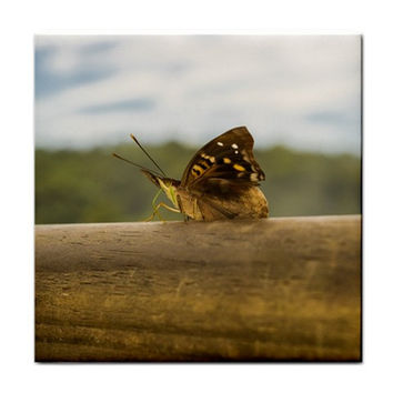 Butterfly against Blur Background at Iguazu Park Tile Coasters