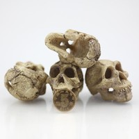 Artificial Rhino Sheepshead Resin Skulls | Terrarium Reptile Cave Decoration