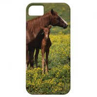 Arabian Mare and Foal iPhone 5 Covers from Zazzle.com