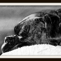 The Sleeper B&W - Boxer Dog A4 Size Limited Edition Print