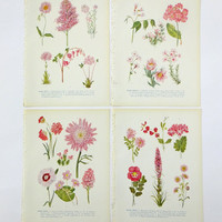 Pink flowers, 4 Botanical Illustrations, Flower Pictures Set, Pastel Pink, Instant collection