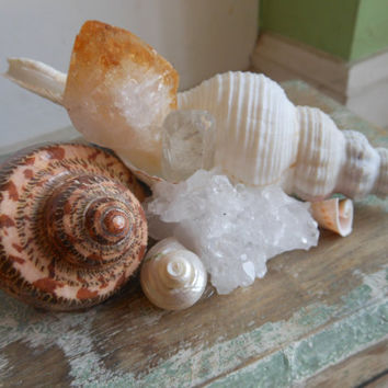 Wooden Seashell and Natural Crystal Jewelry Box by LiveCoastal