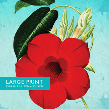 Dipladenia decor Dipladenia art Dipladenia gift botanical print flower decor floral print floral wall art Canvas or Satin Photo Paper