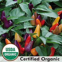 Pepper, Aurora Organic | Seed Savers Exchange
