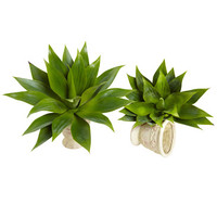 "Nearly Natural 17"" Agave Succulent Plant Set of Two"