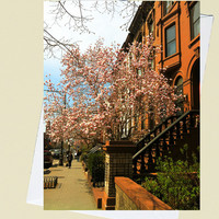 Brownstones and Blossoms - Brooklyn - New York - 4x5.5 Eco Friendly Postcard or Folded Note Card - Fine Art Photography
