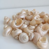 Iridescent Pearl Sea Shells