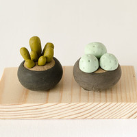 Two Miniature Potted Plant on wood base succulent cactus exotic blue green polymer clay home decor clay botany fantasy