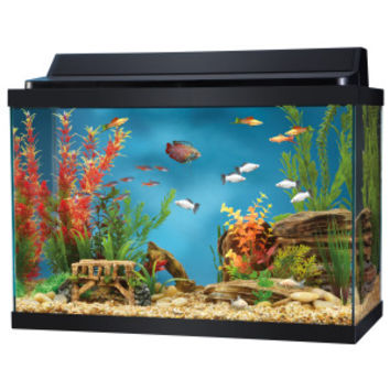 Top Fin 20 Gallon Hooded Aquarium | Aquariums | PetSmart